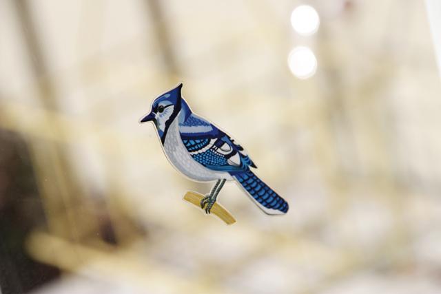birdwatching6
