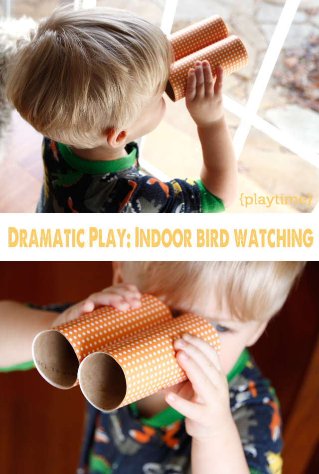 indoorbirdwatching