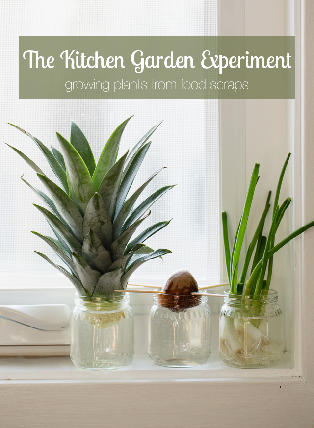 Grow a windowsill garden with your kids using food scraps (with a free printable)