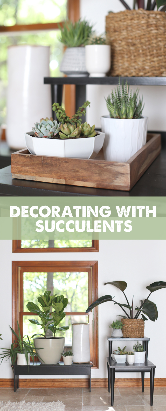 Decorating With Succulents: Three trends to try along with product recommendations to get the look